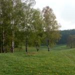 Pastviny a remízky