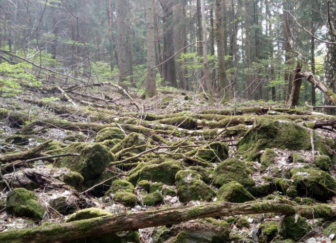 Divočina a prales
